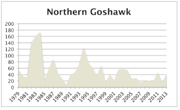 NorthernGoshawk2013