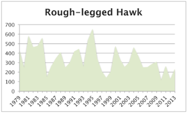 Rough-leggedHawk2013