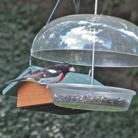 One of the pleasures of summer feeding is seeing species such as this Rose-breasted Grosbeak that we would never see in the winter. Credit: Diane Emord