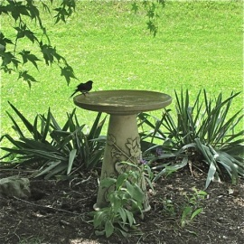 A well-placed birdbath. Its in the shade, the ground underneath is only loosely vegetated and there are branches nearby for quick escapes. Credit: Donna Sponn