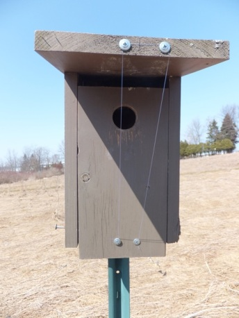 House Sparrow deterrent. Eastern Bluebirds and Tree Swallows can avoid the monofilament.