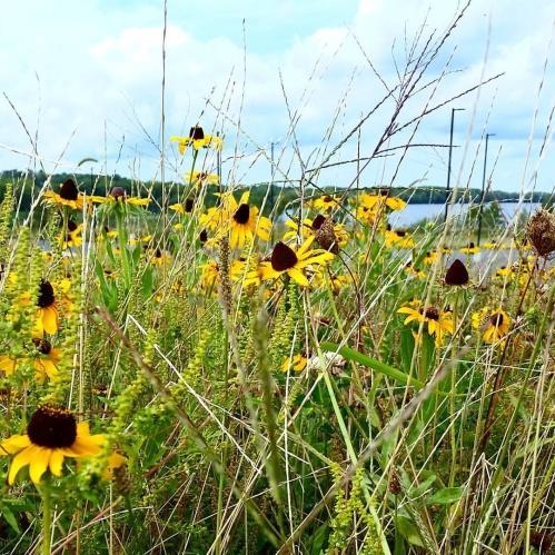onondaga-lake-restoration-wetlands-a-kocek