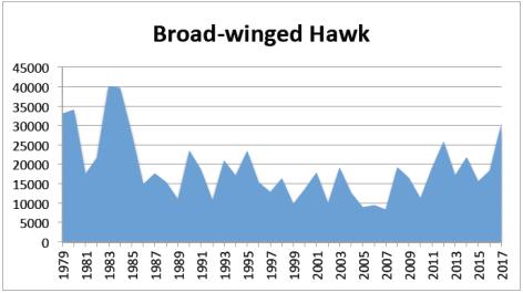 BW hawk 2017