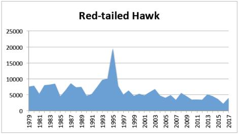 RT Hawk 2017
