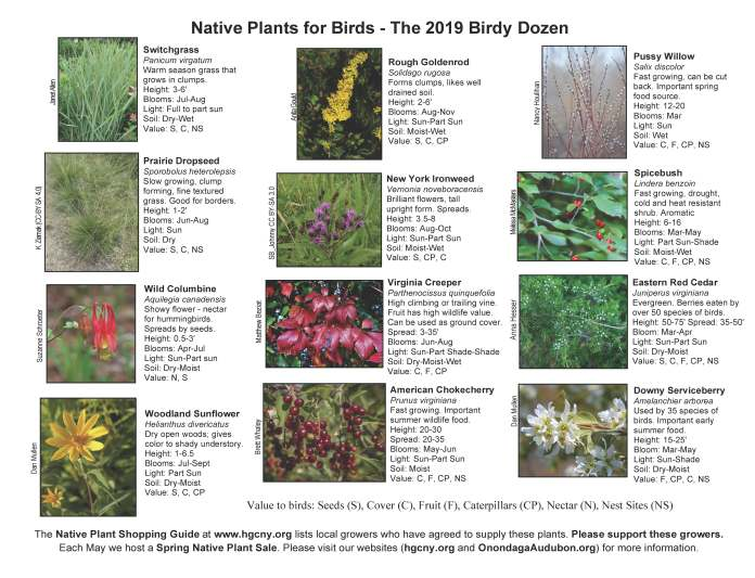 Brochure 2019 Native plants